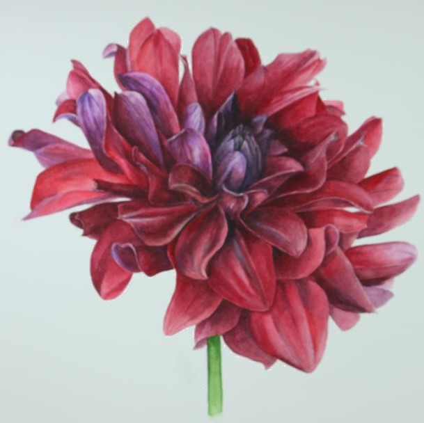 /uploads/courses/4319-03/Dahlias.jpg